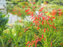 Flor anaranjada con el fondo de la falta de definición Foto de archivo libre de regalías