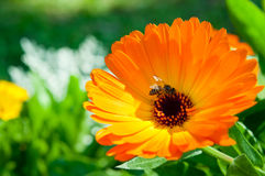 Flor anaranjada con la luz de la naturaleza Fotos de archivo