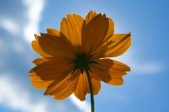 Flor anaranjada contra el cielo azul fotos de archivo