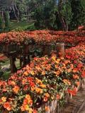 Flor anaranjada de Beautifui a lo largo del pasillo Fotografía de archivo libre de regalías