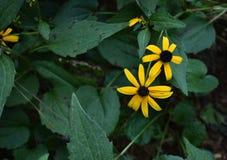 Flor anaranjada del cono Imagen de archivo