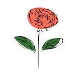 Flor anaranjada del crisantemo del bosquejo stock de ilustración