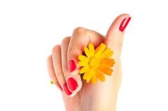Flor anaranjada del gerber Fotografía de archivo libre de regalías
