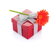 Flor anaranjada del gerbera sobre la caja de regalo roja Foto de archivo