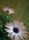 Flor anaranjada del resorte Imagen de archivo