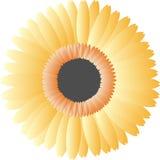 Flor anaranjada del vector Imágenes de archivo libres de regalías