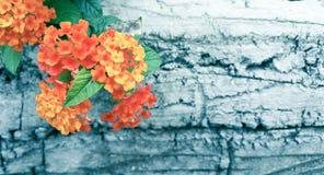 Flor anaranjada en el fondo de madera en el efecto fresco del tono, foco selectivo Fotografía de archivo
