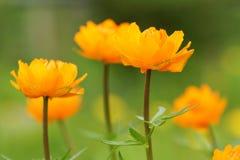 Flor anaranjada en el jardín Imagen de archivo libre de regalías