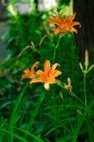 Flor anaranjada en fondo de la naturaleza imagen de archivo libre de regalías