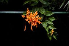 Flor anaranjada en jardín botánico fotos de archivo