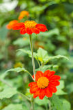 Flor anaranjada en naturaleza Imagen de archivo