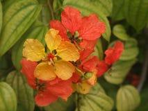 Flor anaranjada en verano Imágenes de archivo libres de regalías