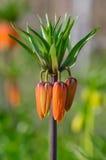 Flor anaranjada exótica Foto de archivo libre de regalías