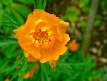 Flor anaranjada hermosa imágenes de archivo libres de regalías