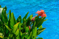 Flor anaranjada sobre piscina Fotografía de archivo
