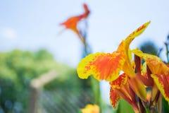 Flor anaranjada y amarilla con el fondo del cielo Foto de archivo