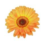 Flor anaranjada y amarilla en blanco Foto de archivo libre de regalías
