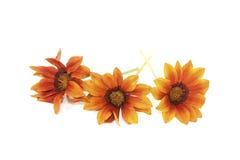 Flor anaranjada y marrón fresca del mediodía imágenes de archivo libres de regalías
