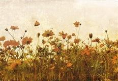 Flor antiquado Imagem de Stock Royalty Free