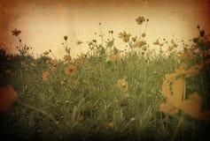 Flor antiquado foto de stock royalty free