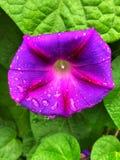 Flor após a chuva imagem de stock royalty free