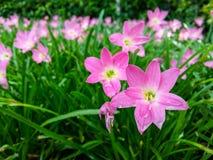 Flor archivada el día soleado Fotos de archivo