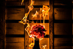 Flor ardiente en un fondo oscuro del cajón Imagen de archivo libre de regalías