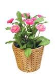 Flor artificial Imagenes de archivo