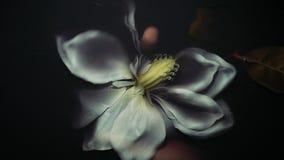 A flor artificial branca na água preta grossa, agarra a mão do homem, trações em profundidades filme