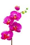 Flor artificial de la orquídea en el fondo blanco foto de archivo