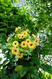 Flor artificial de pano amarelo bonito Fotos de Stock