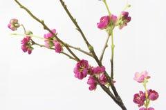 Flor artificial del ciruelo imagen de archivo libre de regalías