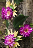Flor artificial en la madera vieja imagenes de archivo
