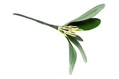 Flor artificial hermosa Fotos de archivo