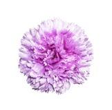 Flor artificial magenta aislada Imagen de archivo