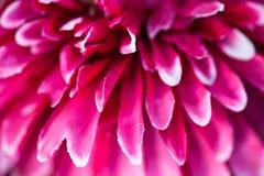 Flor artificial rosada fotografía de archivo