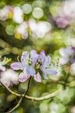 Flor ascendente próxima do rododendro imagem de stock