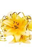 Flor asiática bonita da íris Imagem de Stock Royalty Free