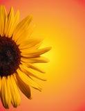 Flor asoleada imagen de archivo