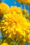 Flor asoleada Fotos de archivo libres de regalías