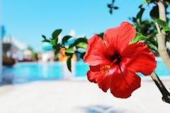 Flor asoleada foto de archivo