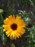 Flor asoleada Foto de archivo libre de regalías