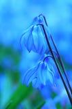 Flor azul Imagen de archivo libre de regalías