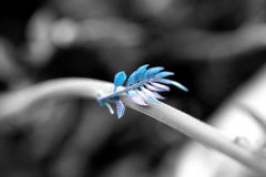 Flor azul Fotos de archivo libres de regalías