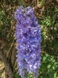 Flor azul Imagen de archivo