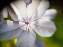 Flor azul imagem de stock
