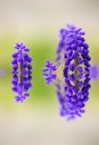 Flor azul bonita com reflexão em uma água collage Sele foto de stock