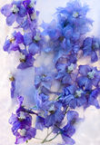Flor azul congelada do delphinium Fotografia de Stock