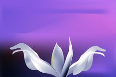 Flor azul claro mística en el cielo de la puesta del sol Imágenes de archivo libres de regalías