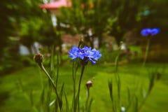 Flor azul con el fondo borroso fotos de archivo